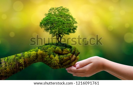 environment Earth Day In the hands of trees growing seedlings. Bokeh green Background Female hand holding tree on nature field grass Forest conservation concept #1216091761