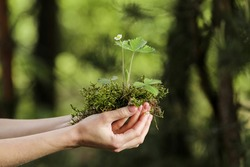 environment Earth Day In the hands of trees, plant growing seedlings. Bokeh green Background Female hands holding tree on nature field grass Forest conservation concept