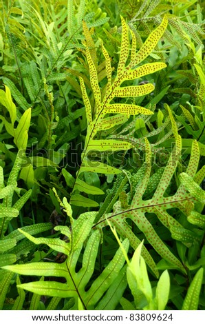 Environmental Image Background Texture Of Tropical Foliage