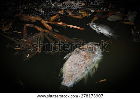 Environmental pollution. Fish die due to water pollution ( waste water )