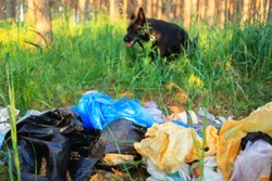 Environmental pollution. Garbage in a forest on the background of a black dog and trees. Concept of man and nature. Illegal garbage dump in nature.