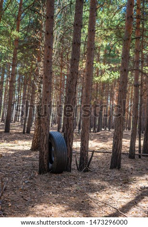 Environmental pollution. the pollution of the forest. automobile tire #1473296000