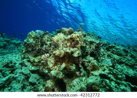 Environmental Problem - dead coral reef killed by pollution and global warming