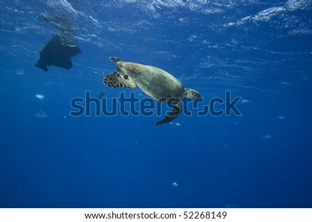 Environmental Problem - Turtle swims through sea full of plastic bags and other trash