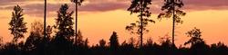 Epic red and golden clouds above the evergreen forest at sunset. Dramatic cloudscape. Dark pine tree silhouettes. Idyllic rural scene. Seasons, autumn, nature, environmental conservation