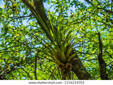 epiphyte in the rainforest ...