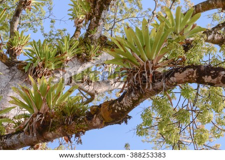 epiphytes in costa rica