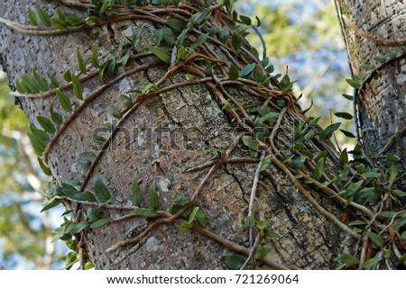 epiphytic plants on tree trunk