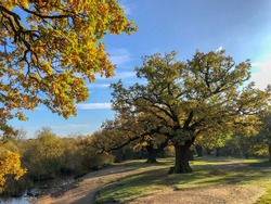 Epping Forest Autumn landscape view with big oak tree. High quality photo