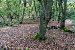 Epping Forest, Essex, England, United Kingdom UK