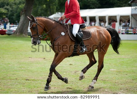 equestrian horse with rider in move