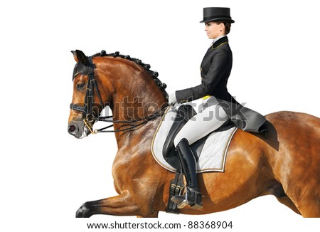 Equestrian sport - dressage (closeup, isolated on white)
