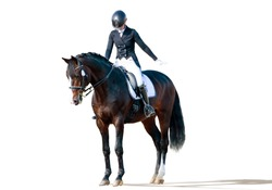 Equestrian sport - dressage rider portrait isolated on white
