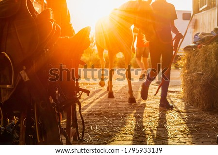 Equestrian tools stored in a stable at evening at the end of the eequestrian training on blurred background with sunset backlight. Mystical atmofphere Photo stock ©