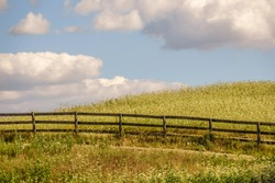 Equine fence in partial silhouette on hillside overgrown with Queen Anne's lace (binomial name: Daucus carota) and tall grass in abandoned pasture on a bright sunny day, for rural and seasonal motifs