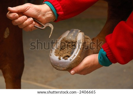 Equine health-care, cleaning the frog - Horse Shoe Cleaning