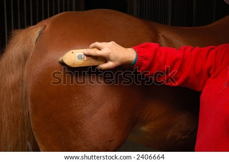 Equine health-care, Horse grooming, brushing the horse down after a ride