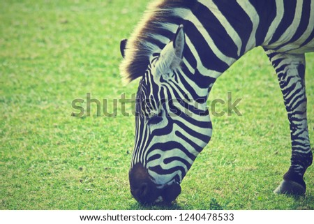 Equine zebra ungulate #1240478533