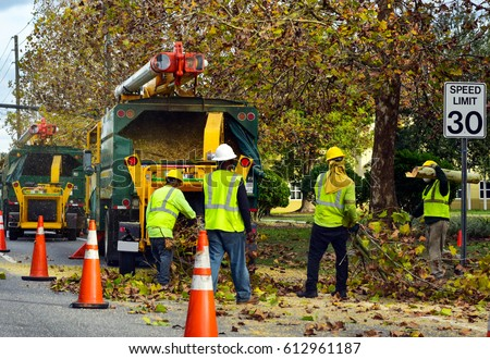 equipment and workers at tree removal site