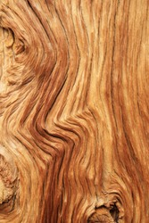 eroded pine trunk with curved wood grain background texture