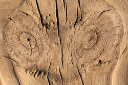Erosion by wind and water has etched out the knots and wood grain in wooden beachfront boardwalk planks revealing interesting and beautiful close-up textures