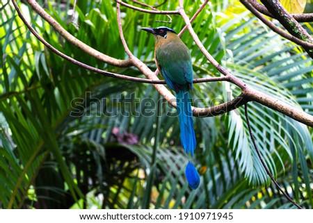 """es un ave a la que le dicen también """"soledad"""" Foto stock ©"""