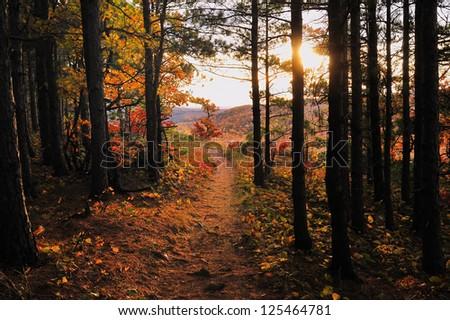Escarpment Trail Porcupine Mountains State Park, Michigan's Upper Peninsula