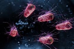 Escherichia coli also known as Ecoli bacteria health science concept