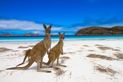 Esperence Lucky Bay Western Australia Kangaroo Beach