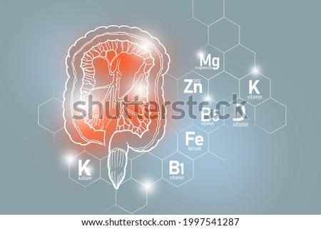 Essential nutrients for Intestine health including Kalium, Ferrum, Magnesium, Vitamin D. Design set of main human organs with molecular grid, micronutrients and vitamins on light gray background. Stock fotó ©