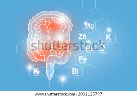 Essential nutrients for Intestine health including Kalium, Ferrum, Magnesium, Vitamin D. Design set of main human organs with molecular grid, micronutrients and vitamins on light blue background. Stock fotó ©