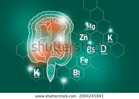 Essential nutrients for Intestine health including Kalium, Ferrum, Magnesium, Vitamin D. Design set of main human organs with molecular grid, micronutrients and vitamins on deep green background. Stock fotó ©