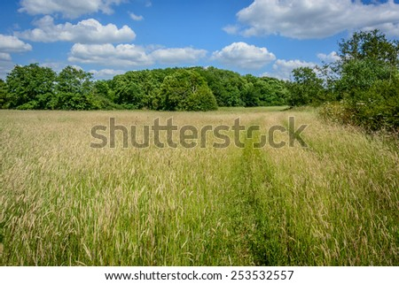 Essex Summer field with trees and a blue cloudy sky in the UK