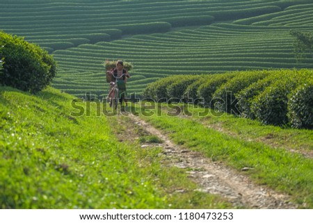 ethnic minority children in the tea growing highlands go out at dawn beautiful. Son La - Viet nam. #1180473253