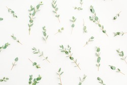 Eucalyptus branch pattern on white background. Flat lay, top view website, blog or social media texture.