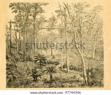 Eucalyptus forest with tree ferns - old illustration by Cordier from Botanika Szkolna na Klasy Nizsze, 