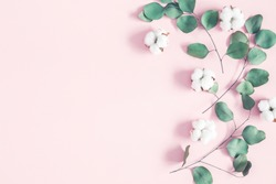 Eucalyptus leaves and cotton flowers on pastel pink background. Flat lay, top view