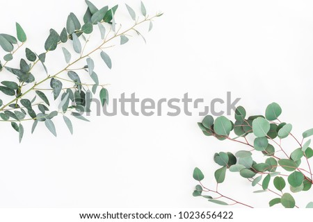 Eucalyptus leaves on white background. Frame made of eucalyptus branches. Flat lay, top view, copy space #1023656422