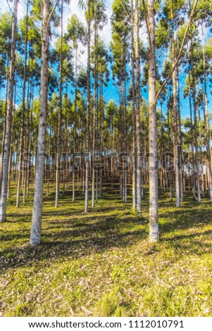 Eucalyptus Reforestation Camp