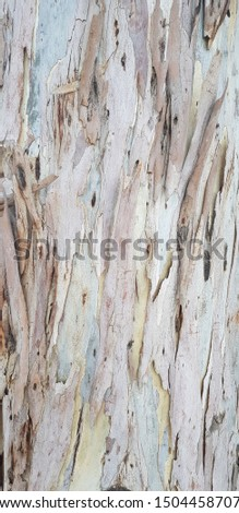 eucalyptus wood bark surface brown  #1504458707