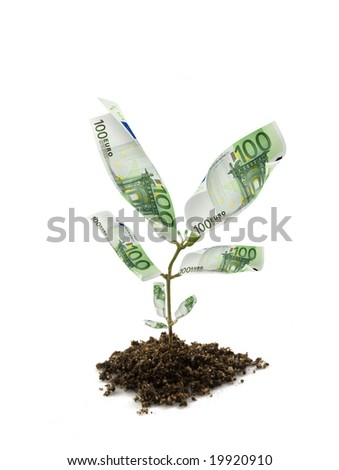 euro bills money plant isolated on white