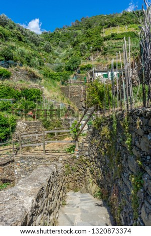 Europe, Italy, Cinque Terre, Vernazza, FOOTPATH AMIDST PLANTS AGAINST SKY #1320873374