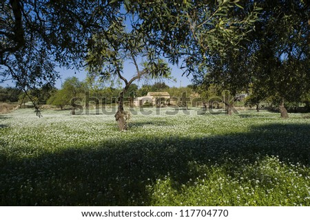 Europe, Italy, Sicily, Typical spring rural landscape in the sicilian hinterland