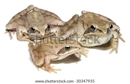 European common brown Frog family