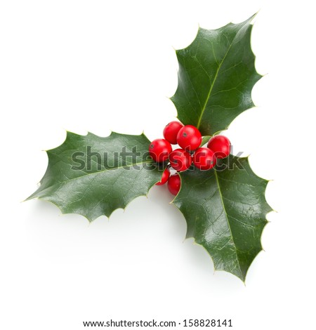 European Holly (Ilex aquifolium) leaves and fruit #158828141