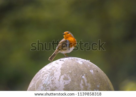 European Robin or Robin Redbreast (Erithacus rubecula), a bird sits on a stone ball