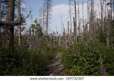 European spruce bark beetle calamity in Tatra