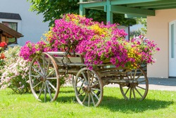 European vintage wagon decorated with annual flowers III