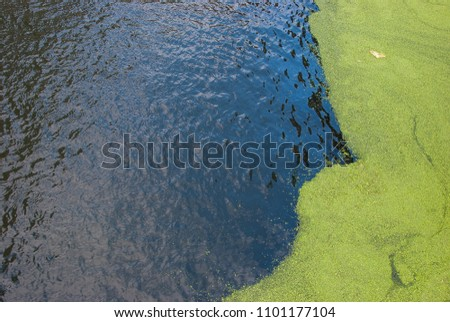 Eutrophication in a river #1101177104