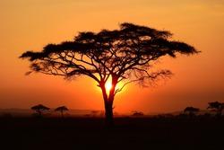evening atmosphere at serengeti, tanzania